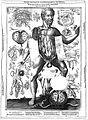 J. Remmelin, 1660; male anatomy Wellcome L0018140.jpg