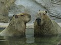 Jacksonville zoological garden, Florida, USA (5586161).jpg