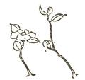 Japanese flower arrangement p160no1.png