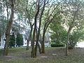 Jardín interior Reina Sofía (3033911538).jpg