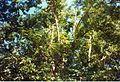 Jardin de Pamplemousses (3001823965).jpg