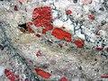 Jasper pebbles in quartzite (Lorrain Formation, Paleoproterozoic, ~2.3 Ga; Ottertail Lake Northeast roadcut, near Bruce Mines, Ontario, Canada) 27 (33831869818).jpg
