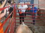 John McCain addresses Iowa pork (1119104695).jpg