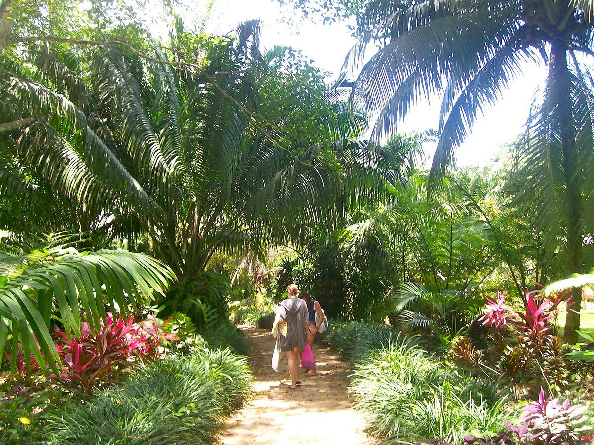 Punta Uva Travel Guide At Wikivoyage