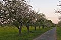 Kühkopf-Knoblochsaue Apfel-Lehrpfad.jpg