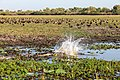 Kakadu (AU), Kakadu National Park, Yellow Water -- 2019 -- 3969.jpg