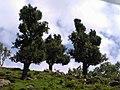 Kalam, Swat,Pakistan 14.jpg