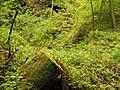 Kavinský potok (21).jpg