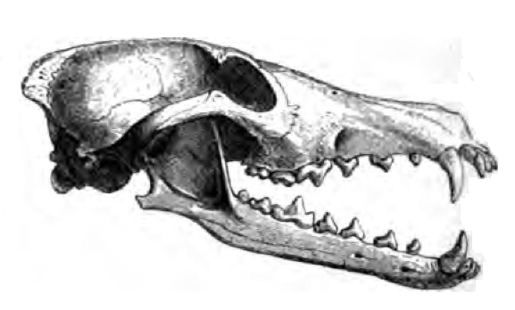 Keberowskull