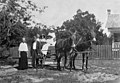 Kelley family members standing next to and sitting in a mule-driven carriage - Hopewell, Florida.jpg