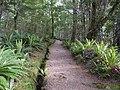 Kepler Track, New Zealand (005).JPG