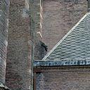 Kerktoren, gedeelte van zuidgevel, gedeelte met dakleien van de kerk met dakgootlijst - Breukelen - 20372422 - RCE
