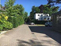Kiefernhain in Hamburg