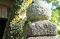 Kinkaku-ji - August 2013 - Sarah Stierch - 06.jpg