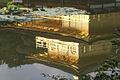 Kinkaku-ji reflection in pond.jpg