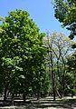Kirovograd Kovalivs'kiy Park 01 (YDS 4776).JPG