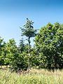 Knudshoved Odde - panoramio (3).jpg