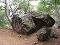 Koko Crater Botanical Garden - IMG 2248.JPG
