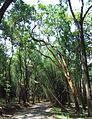 Kuruva Island - Road to Kuruva Island2.jpg