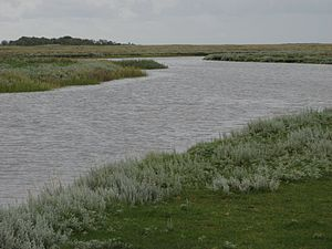National park - A salt marsh in Schiermonnikoog National Park, Netherlands