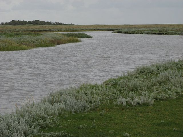 A salt marsh in Schiermonnikoog National Park, Netherlands