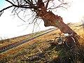 La via en bicicleta - panoramio.jpg