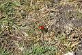 Ladybird on St George's Down.JPG