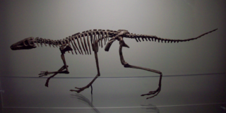 Dinosauromorpha clade of reptiles (fossil)