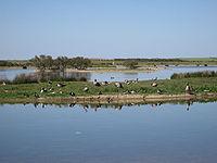 Lagunas de Villafáfila, detalle laguna.jpg