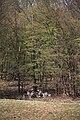 Lainzer Tiergarten März 2014 Kleine Dorotheerwiese.jpg