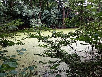 Landschaftsschutzgebiet Warmenau-Ufer LSG OS 00019 Datei 40.jpg