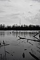 Laurentian Wetlands - Kitchener, Ontario 03.jpg