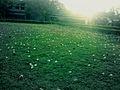 Lawn at AAI.jpg