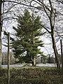 Le lac d'Armainvilliers - panoramio.jpg