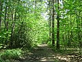 Leafy bridleway next to Edgebarrow School - geograph.org.uk - 799719.jpg