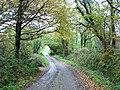 Leafy lane - geograph.org.uk - 602328.jpg