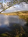 Leighton Moss RSPB reserve - geograph.org.uk - 1586436.jpg