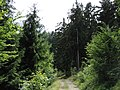 Lesom - panoramio (1).jpg