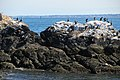 Little Brewster Island, Boston. - panoramio (8).jpg