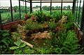 Live Butterfly Enclave Under Construction - Science City - Calcutta 1996-07-30 331.JPG