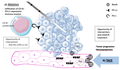 Liver directed therapies and changes in the tumor microenvironment.png