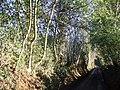 Lockhurst Hatch Lane - geograph.org.uk - 656032.jpg