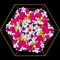 Lon hexamer (from the top).jpg