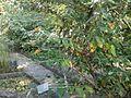 Lorto-botanico-di-padova-2016 28340423396 o 25.jpg