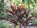 Luang Prabang Botanic Gardens (33528136646).jpg
