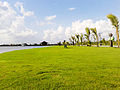 Lush green grass at Eco Park after monsoon.jpg