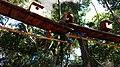 Macaws at the Parque das Aves, Foz do Iguaçu.jpg