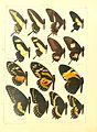 Macrolepidoptera15seit 0031.jpg