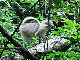 Udzungwa Mountains National Park - Image: Mangabey monkey, Udzungwa Mountains National Park
