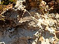 """Marine fossils at """"El Madroño"""" - Landa de Matamoros, Mexico.jpg"""